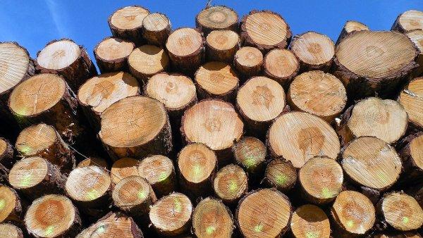 Dřevo - Ilustrační foto.