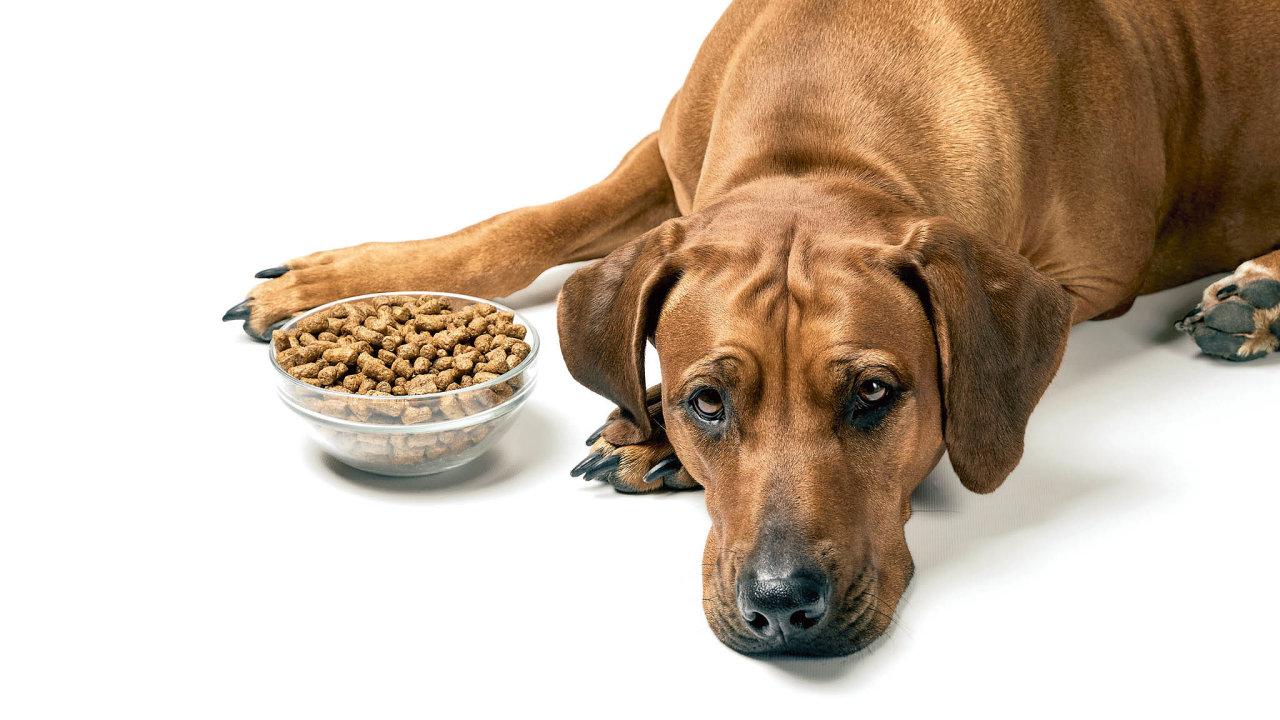 Jeden psí rok se rovná sedmi lidským, ale je to skutečně tak?