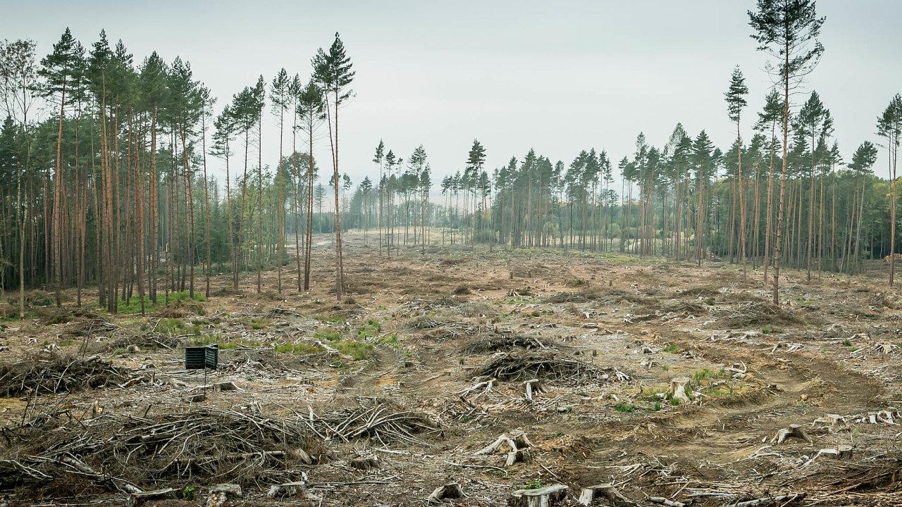 Kalamita. Městské lesy na Dačicku jsou jedny zvýrazně postižených lokalit.