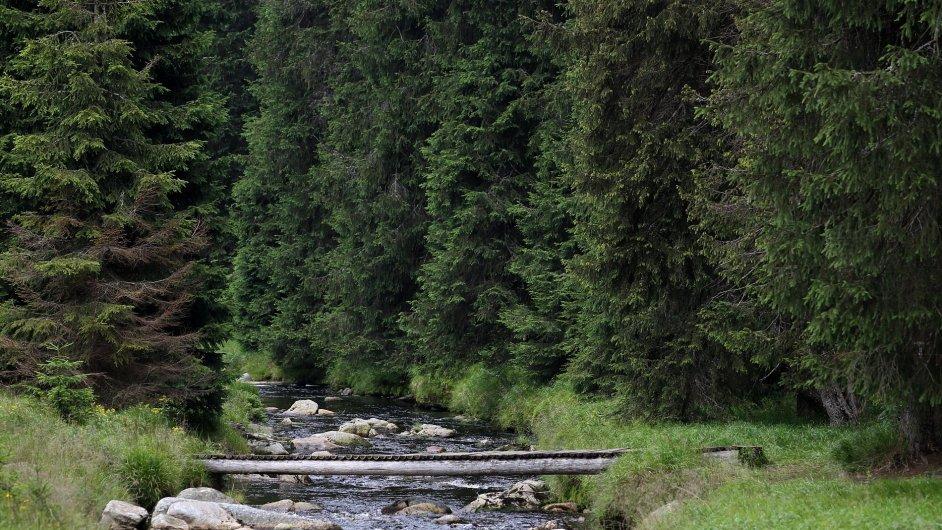 Šumava, ilustrační foto