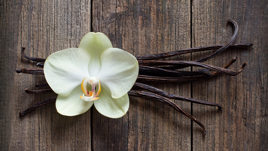 Vanilka, rostlina, ilustrační foto