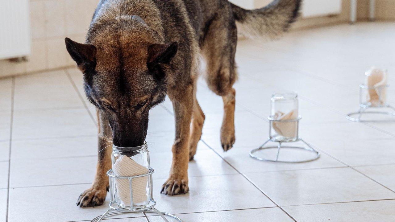 Psi pomáhají odhalovat pachatele zhruba vedvou desítkách států převážně bývalého sovětského bloku. Podmínky vjednotlivých zemích se ale liší.