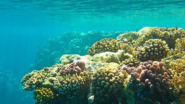 Podmořský svět, ilustrační foto