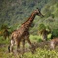 Afrika, ilustra�n� foto.