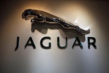 cougar zdarma ve Velké Británii