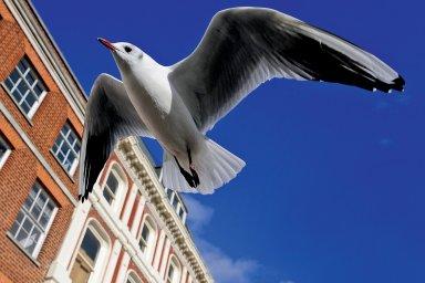 Ptačí peří je kožní derivát tvořený zrohovatělou pokožkou.