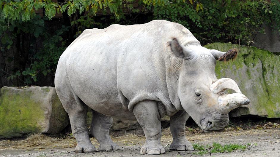 V dvorské zoo uhynula samice vzácného nosorožce severního bílého.