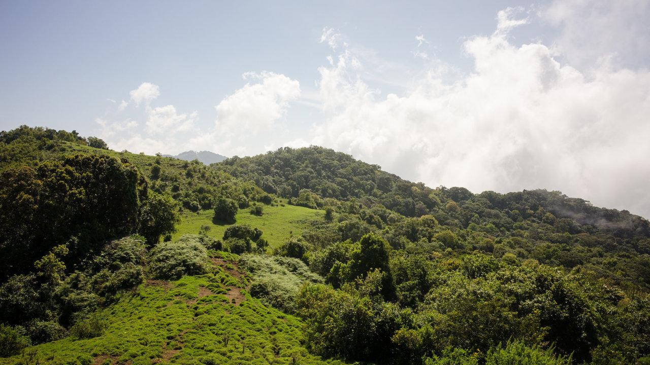 """Africké horské lesy. IvAfrice má Země jedny """"plíce"""" Ukazuje se zde, jak komplexní je problematika zachycování avylučování uhlíku souvislým stromovým porostem."""