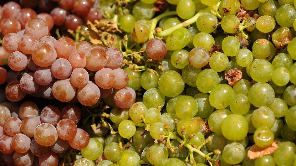 Tuzemské víno slaví po světě úspěch.