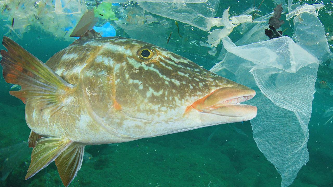 Plastový odpad zamořuje světové oceány, usmrcuje ryby a další vodní živočichy, v jídle se pak látky z něj dostávají k lidem.