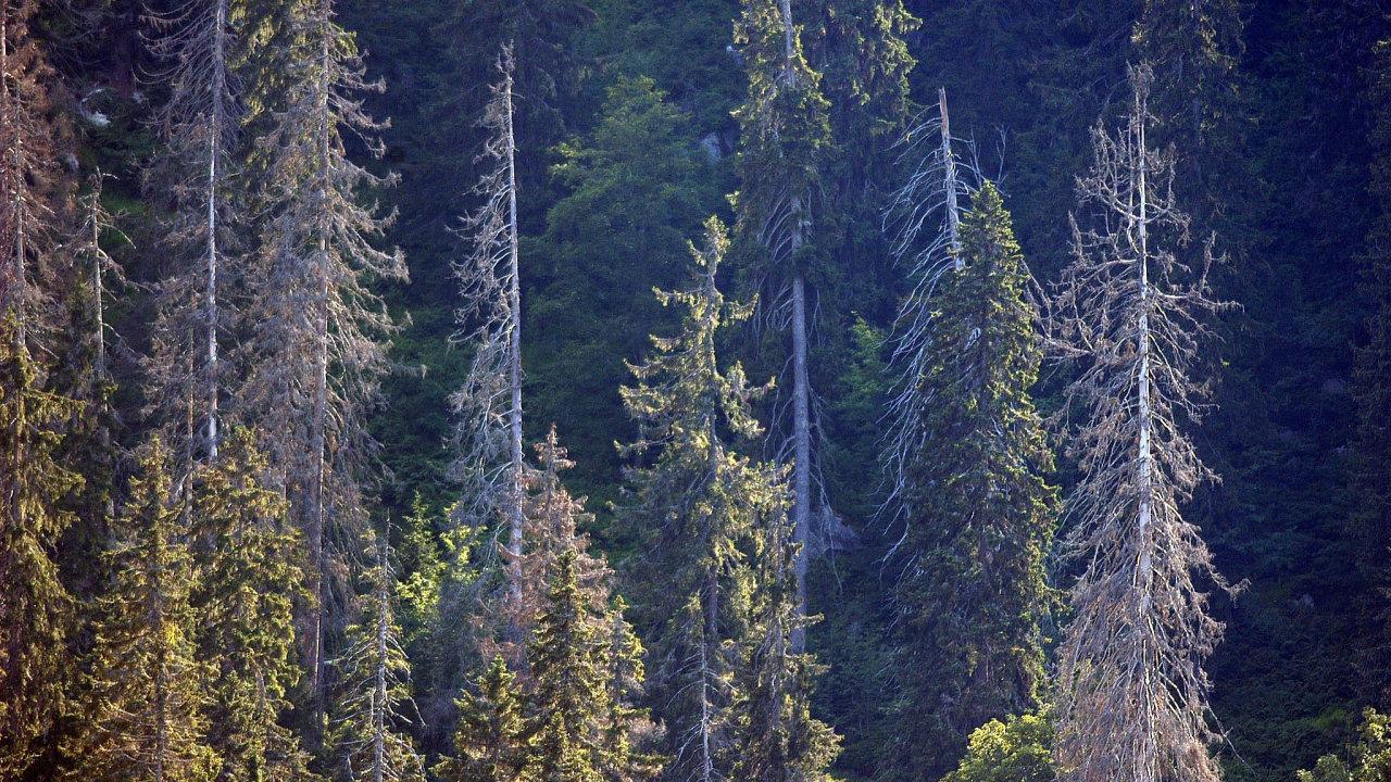 Lesy ČR stále bojují skůrovcovou kalamitou.