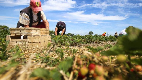 5 věcí, které trápí české zemědělství