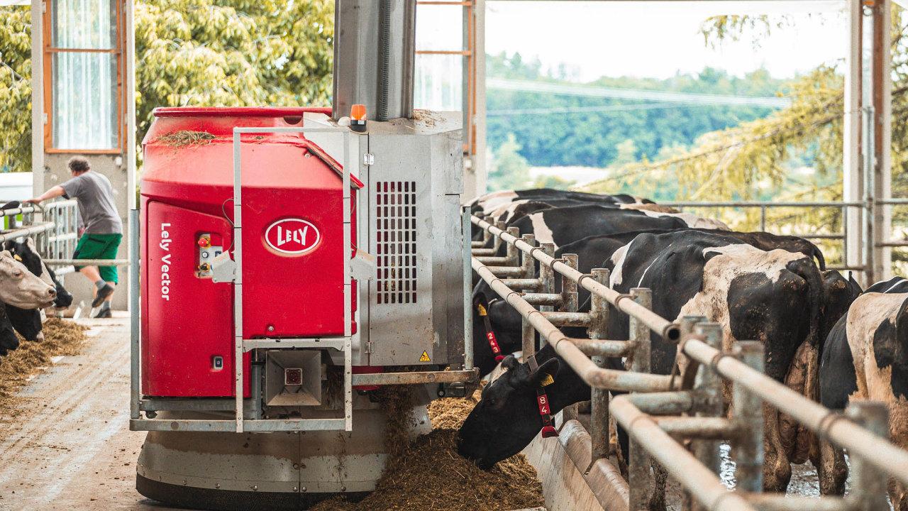 Robot krmič: Obrovský červený robot pohybující se centrální uličkou kravína přihrnuje kravám krmení adoplňuje jej.