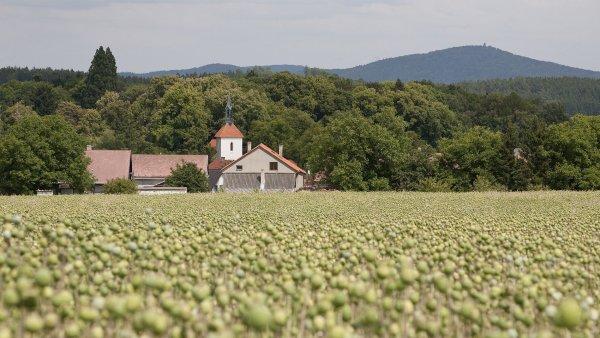 Na každý hektar mohou zemědělci získat mimo jiné dotace 5442 korun na plochu - Ilustrační foto.