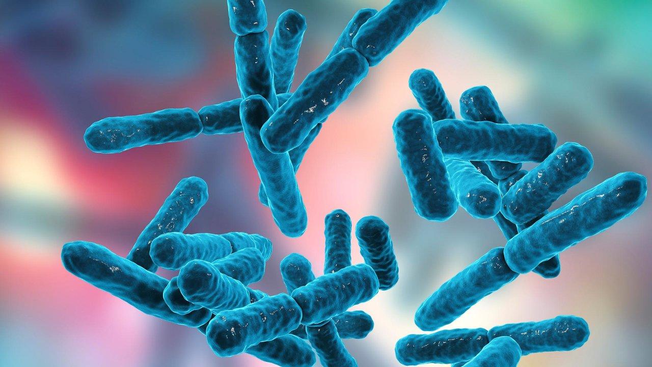 Brněnští výzkumníci pracují sbakteriemi zrodu Pseudomonas, které se vyskytují všude posvětě, ato jak třeba vpůdě, tak vmoři.