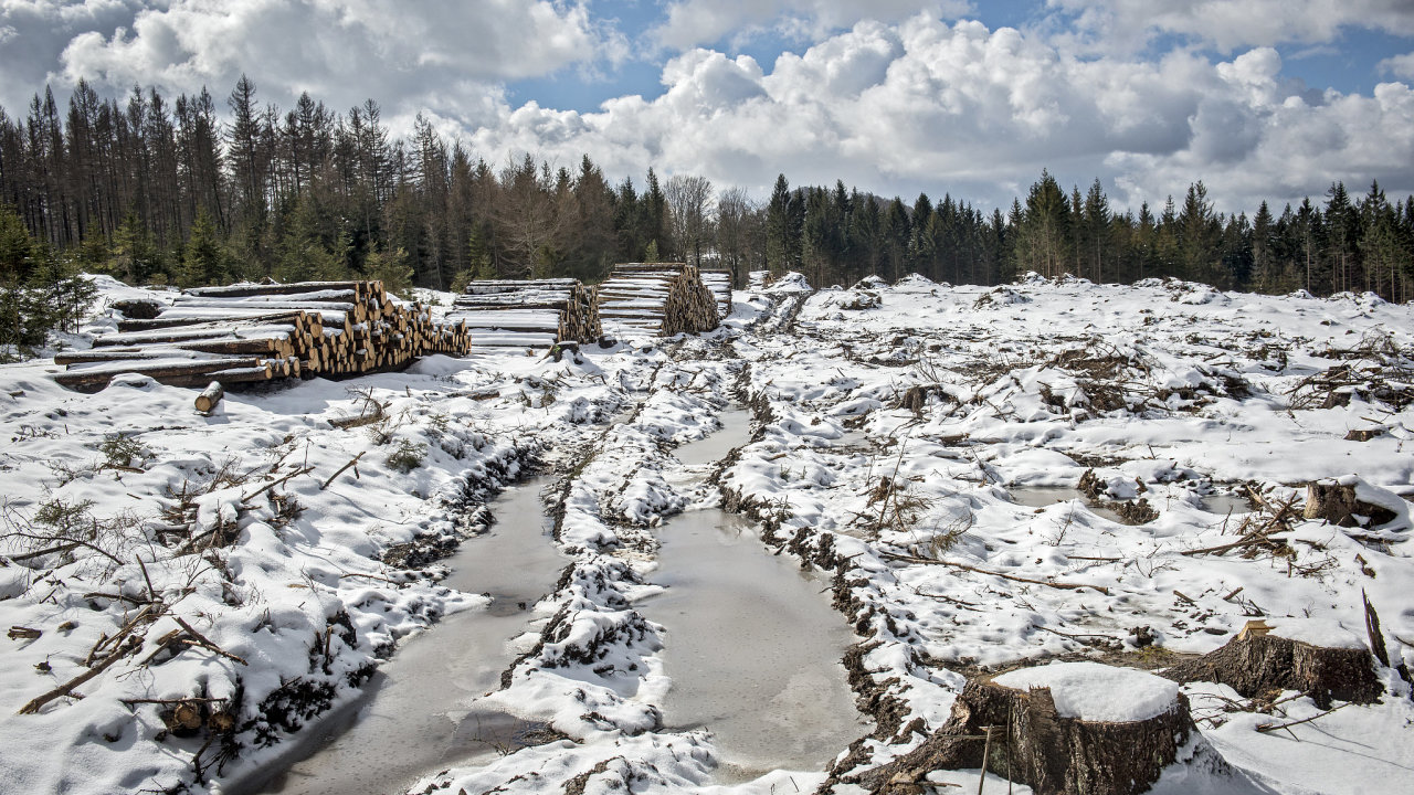 Lužické hory, těžba kůrovcového dřeva, kůrovec